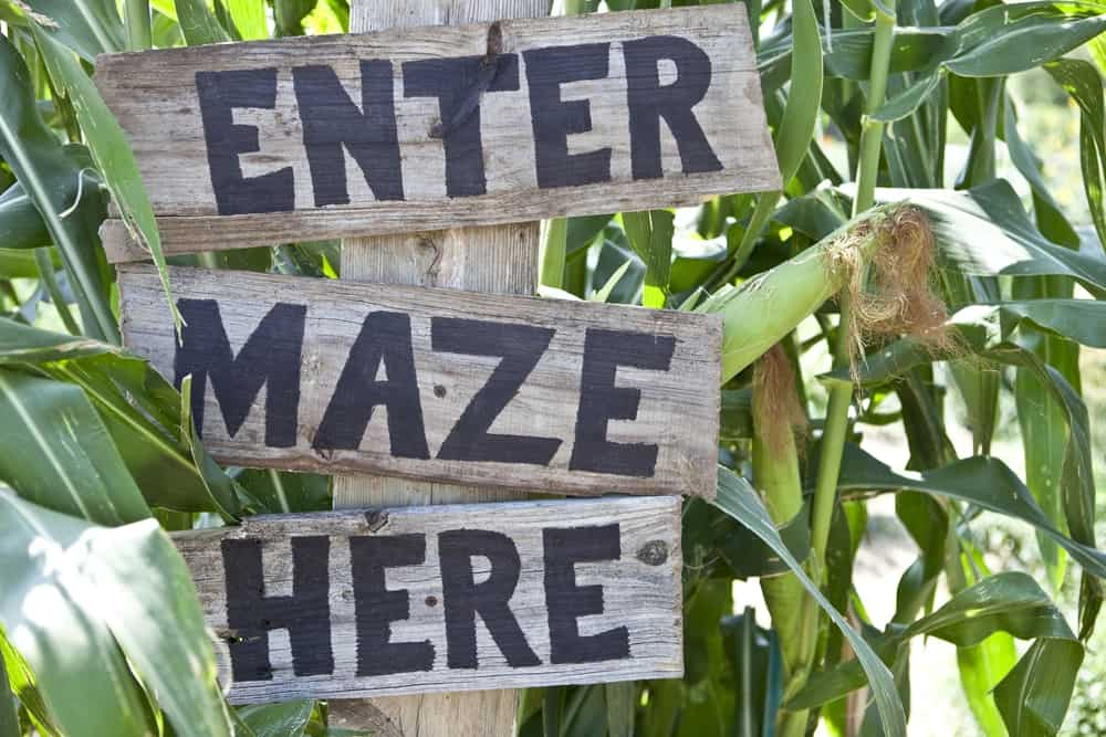 """Corn maze sign that says """"enter maze here"""""""