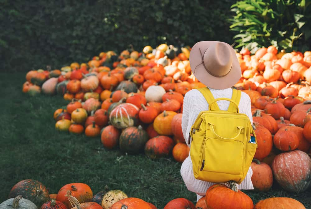 Person with a yellow backpack sitting surrounded by pumpkins
