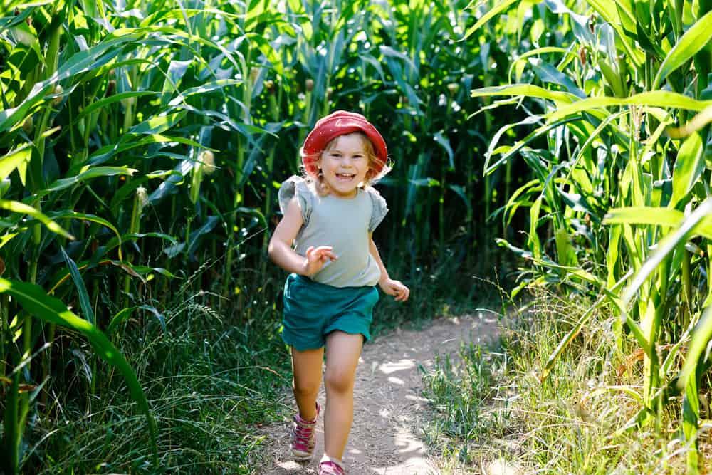 Girl running and having fun in a corn maze