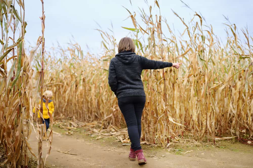 Mom and son walking in a corn maze