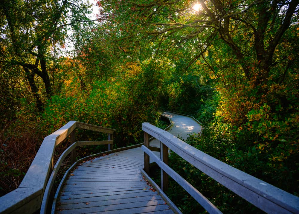 Wooden walkway covered with forest