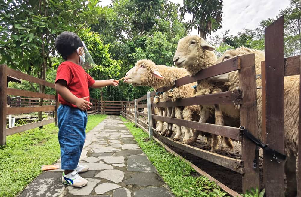 Child feeding animals at a zoo