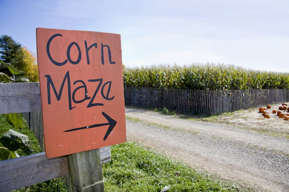 Sign that says corn maze with an arrow pointing right