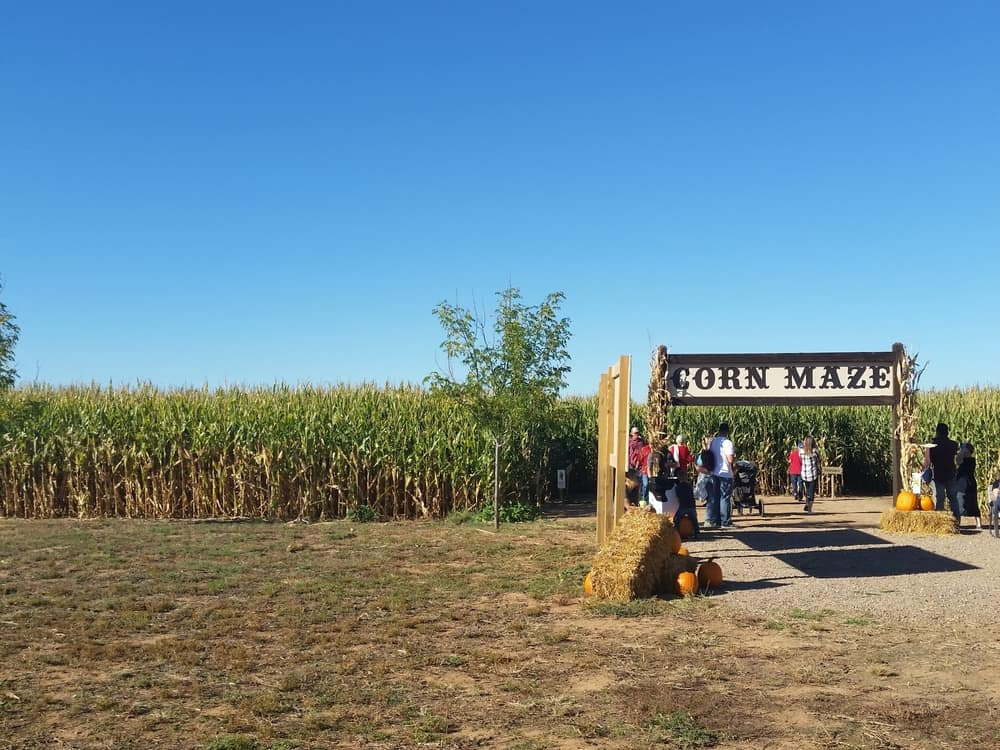 Entrance to a corn maze with people walking in