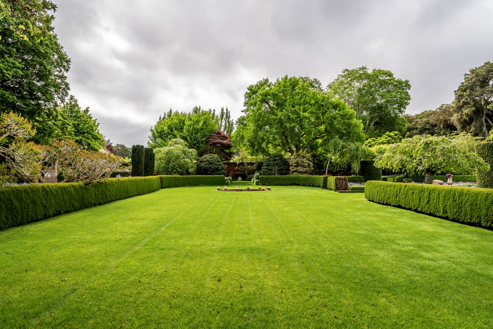 Green garden with lots of trees