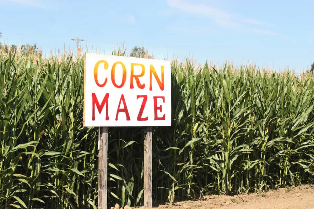 Corn maze with a sign that says corn maze, corn mazes in vermont
