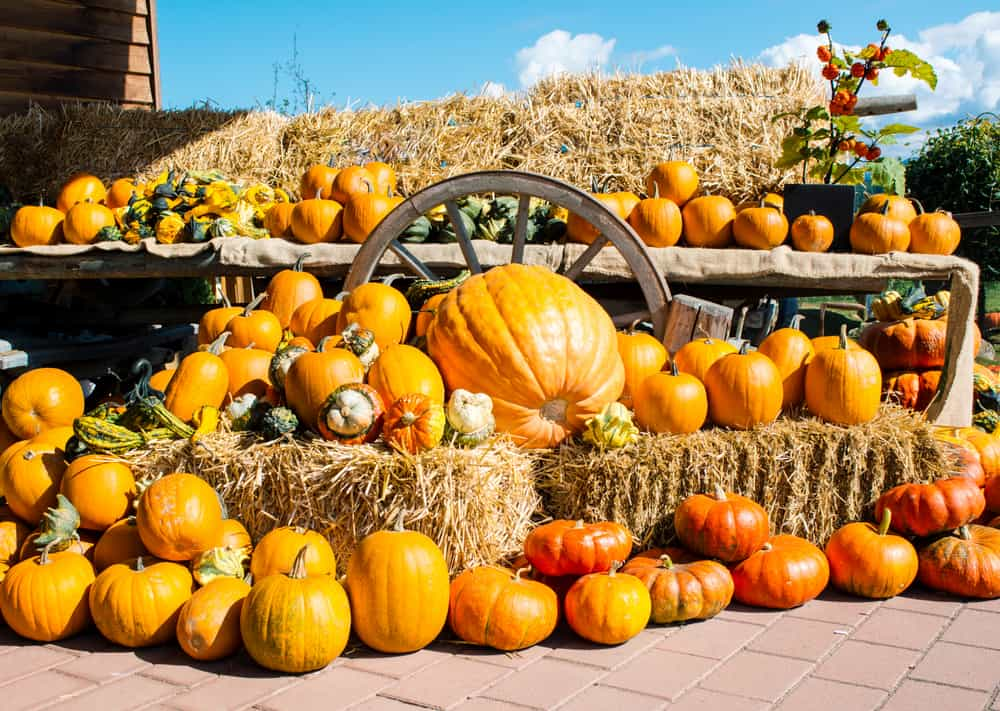 piles of pumpkins and hay on a wagon