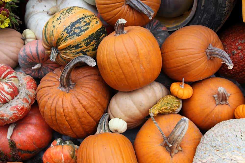mismatched pumpkins piled up