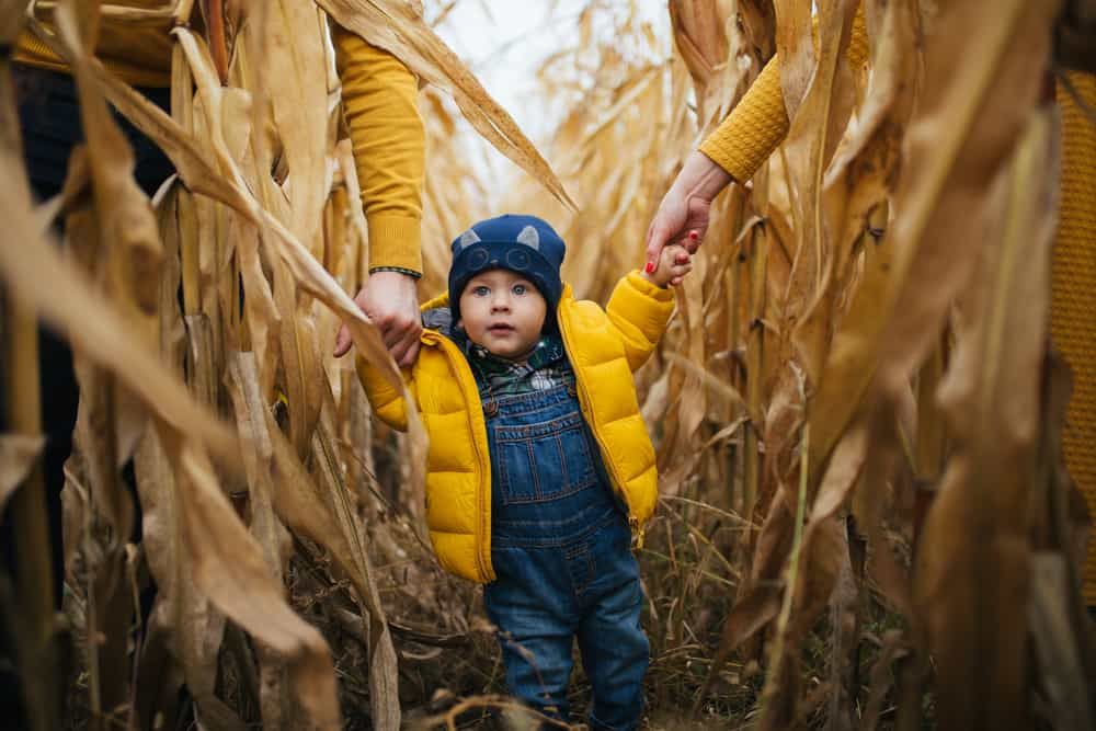 Child holding parents hands in a corn maze