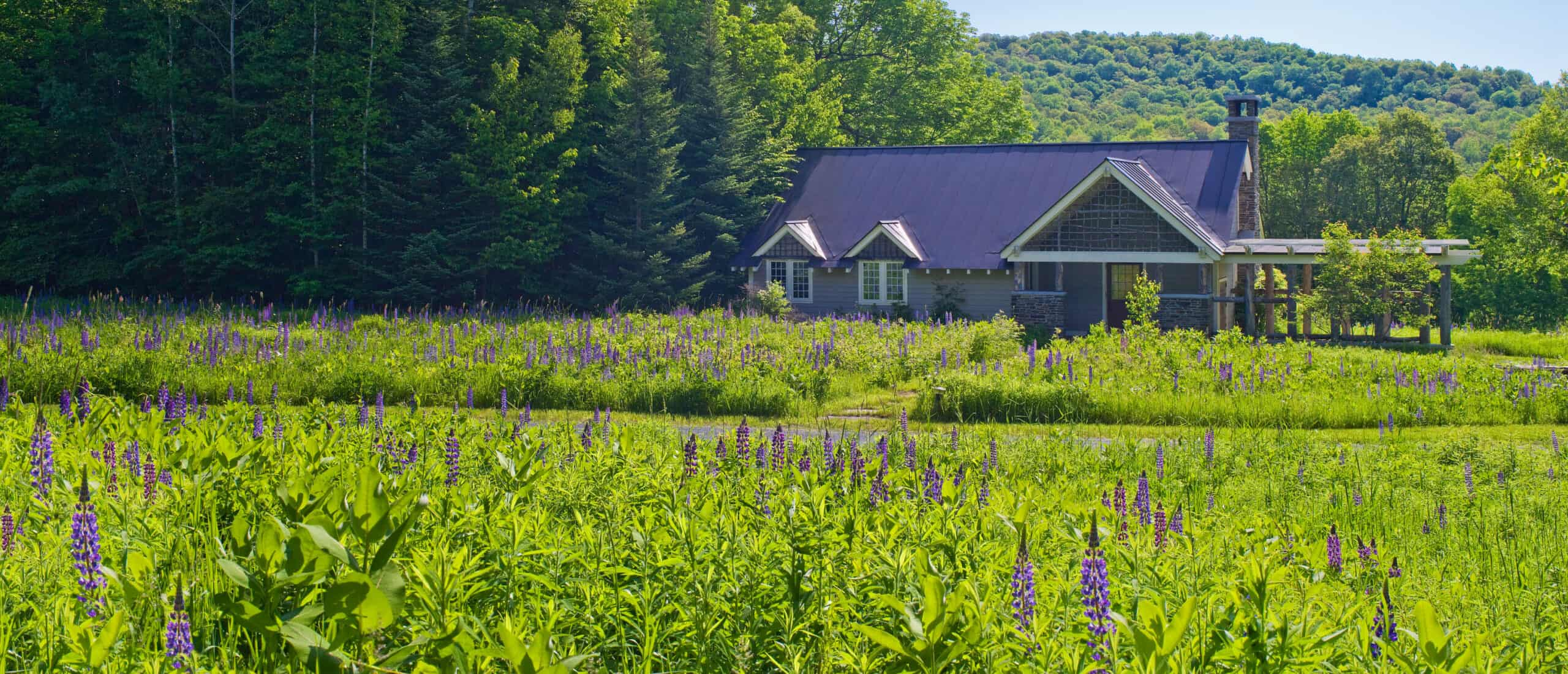 Tiny house situated on a beautiful lavender farm