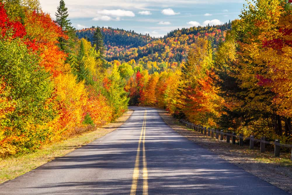 Empty road surrounded by trees in the fall, Fall Foliage in Vermont
