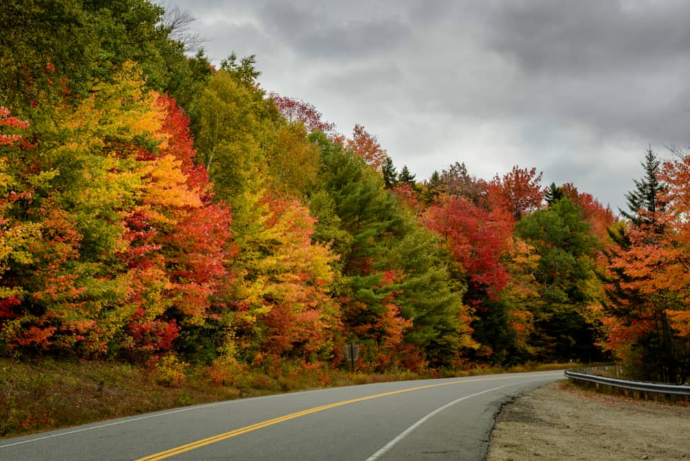 Colorful trees along an empty highway