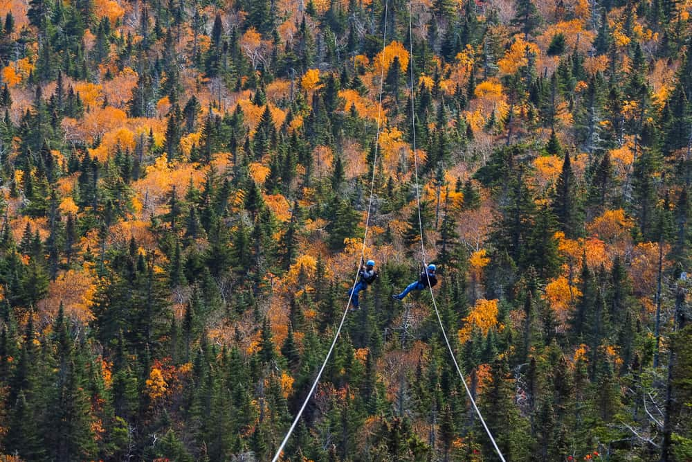 People ziplining over trees during fall