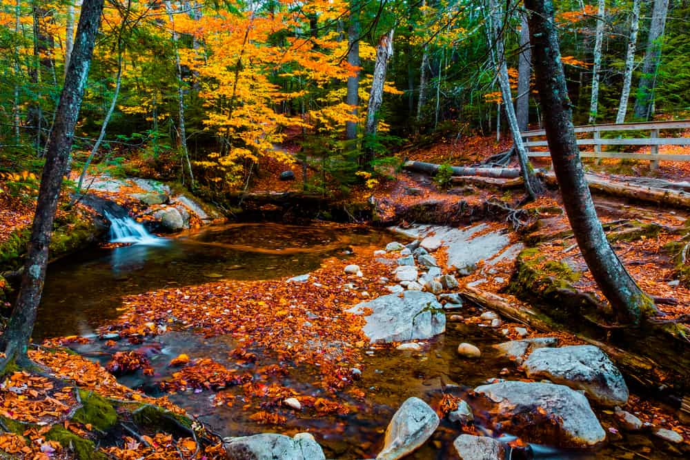 Lake in a forest during fall