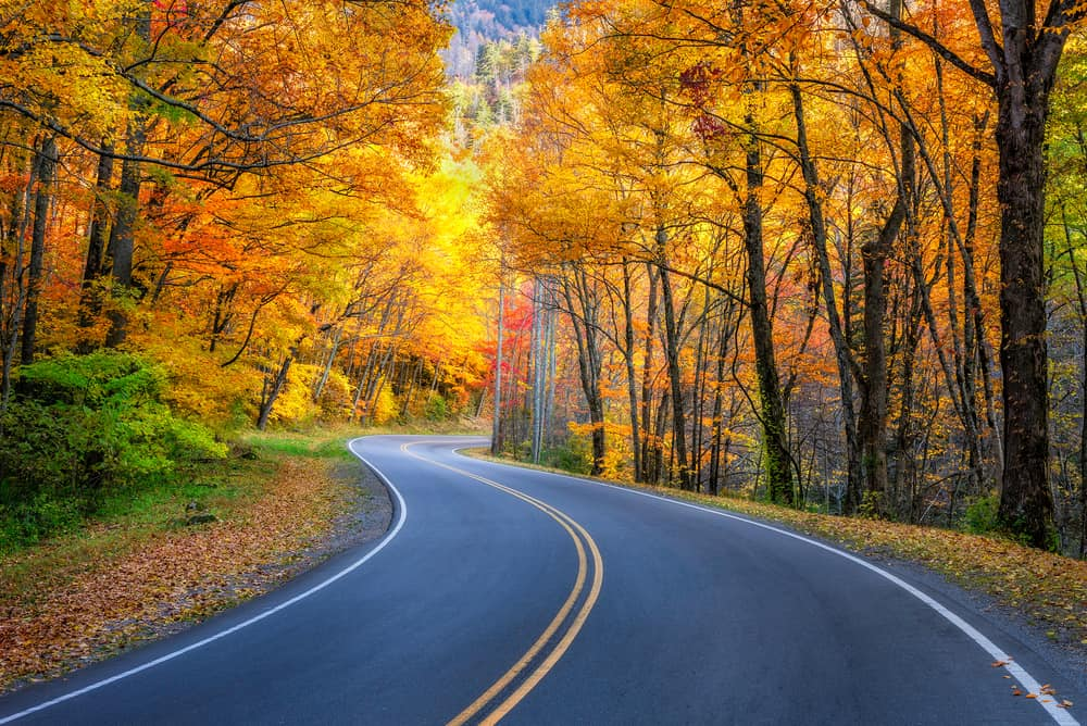 Empty road going through a forest with fall foliage