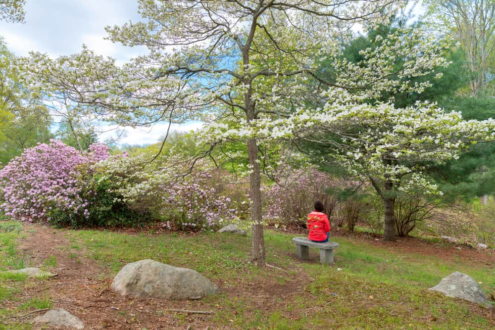 Person sitting on a bench surrounded by floral trees